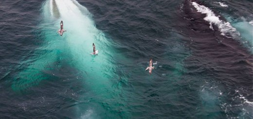 white-whale-willow