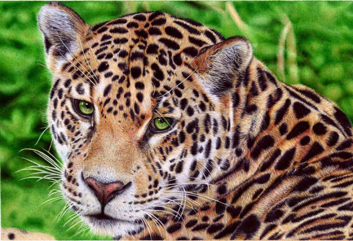 jaguar___ballpoint_pen_by_vianaarts