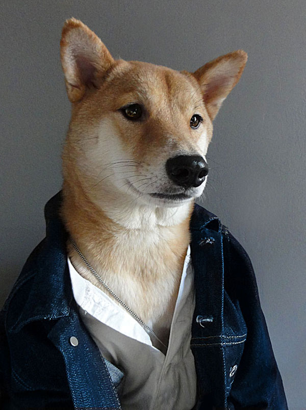 menswear-dog-dressed-in-clothes-fashion-look-book-5