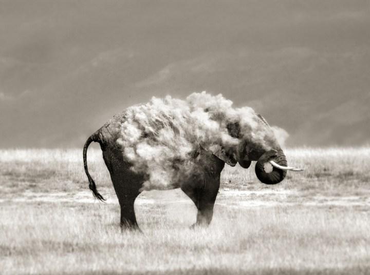 An-Elephant-in-Sheeps-Clot