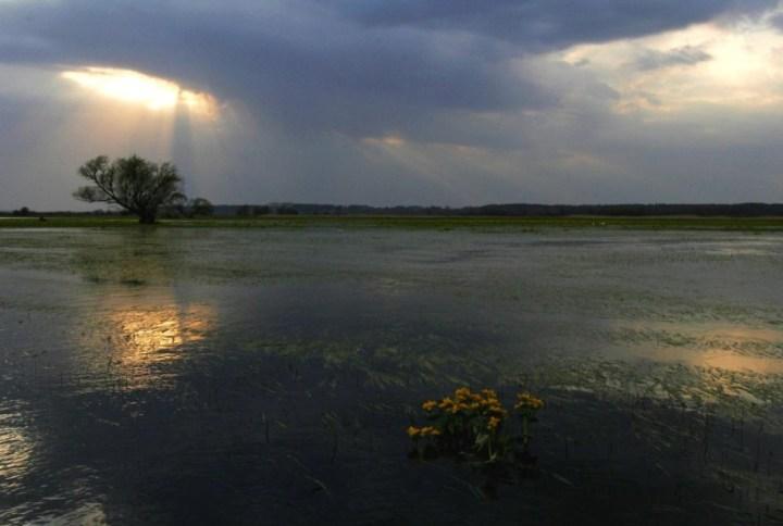 Biebrza River, Biebrza National Park - Wizna area / Piotr Skórnicki / Agencja Gazeta