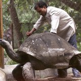 adwaita-aldabra-tortoise-oldest-in-the-world
