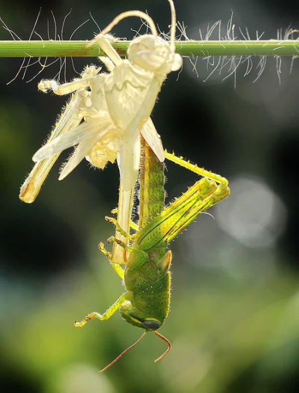 bug_doubler_04