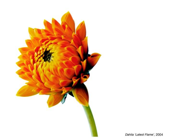 flowerimg_04