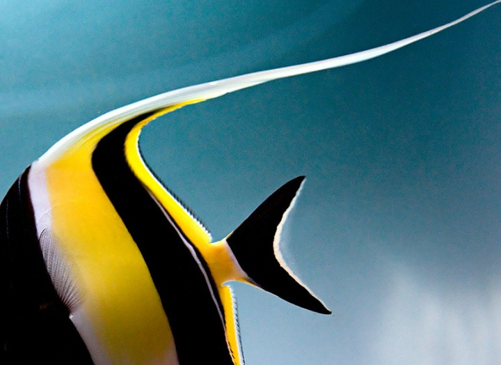 fishstripe