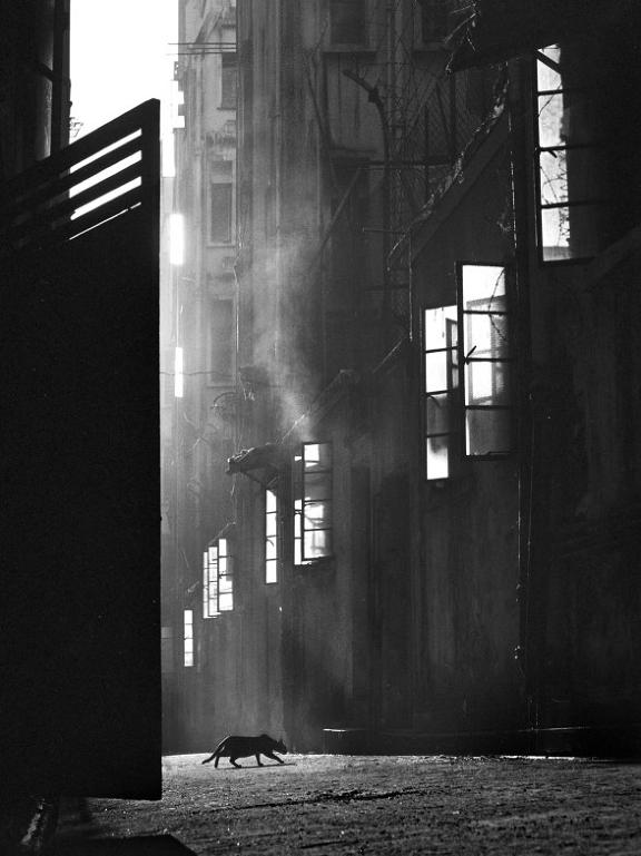 Street+Scenes+of+Hong+Kong+in+the+1950s+9