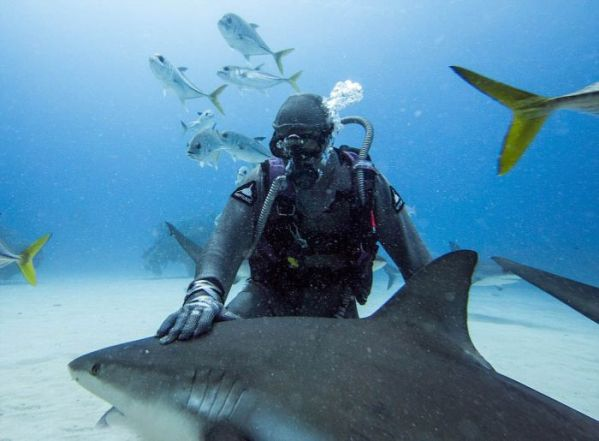 incredible_moment_shark_whisperer_hypnotises_deadly_shark_15_minutes_02