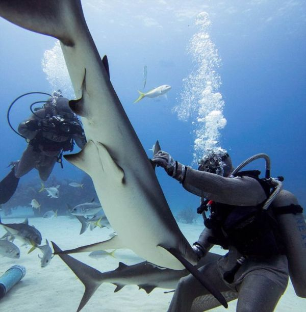 incredible_moment_shark_whisperer_hypnotises_deadly_shark_15_minutes_06