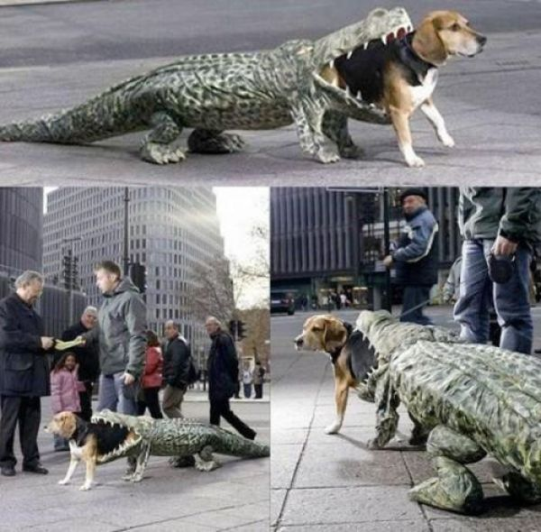 pet_owners_who_should_get_medals_for_being_awesome_05