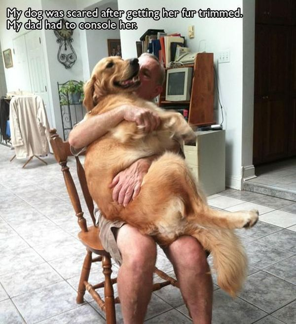 pet_owners_who_should_get_medals_for_being_awesome_14