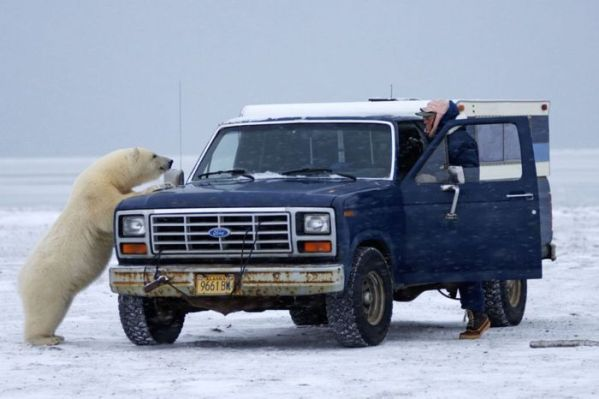 polar_bear_03
