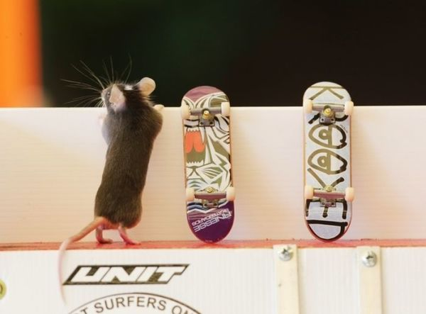 you_have_to_see_these_pictures_of_skateboarding_mice_05