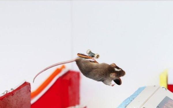 you_have_to_see_these_pictures_of_skateboarding_mice_09
