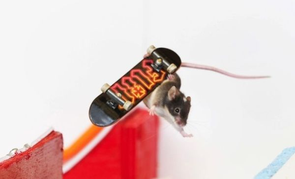 you_have_to_see_these_pictures_of_skateboarding_mice_10