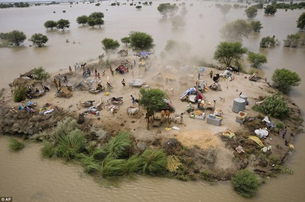 cocooned-trees-flooding-aerial-view