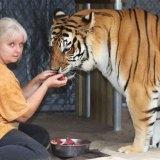 pet-tigers-janda-saber-janice-haley-2
