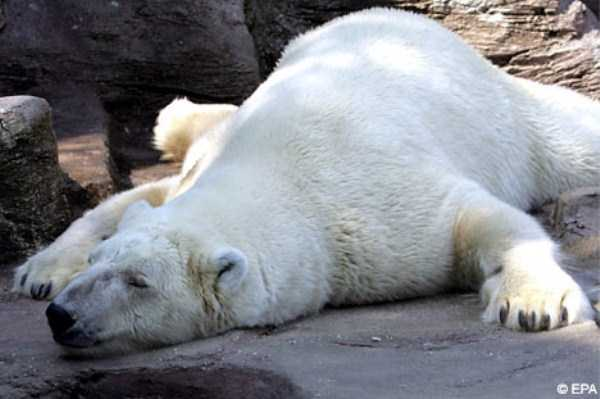 Exhausted But Still Cute Animals | Memolition  Exhausted But S...