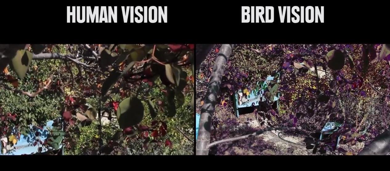 Cat Vision Vs Human