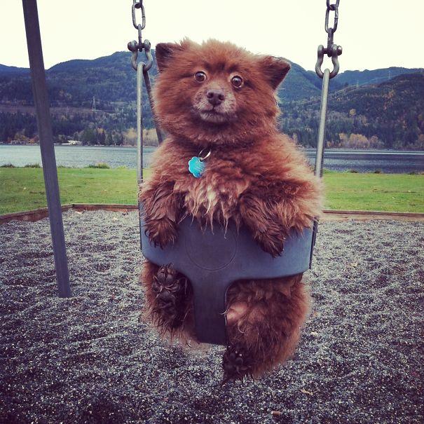 bear-dogs-551__605