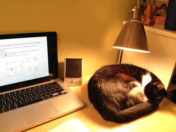 cats-enjoying-warmth-47__605