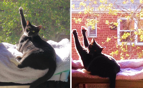 cats-enjoying-warmth-1121__605