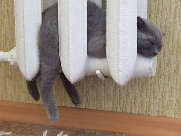 cats-enjoying-warmth-52__605