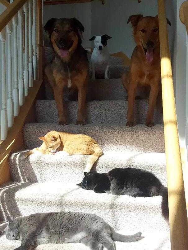 cats-enjoying-warmth-200__605