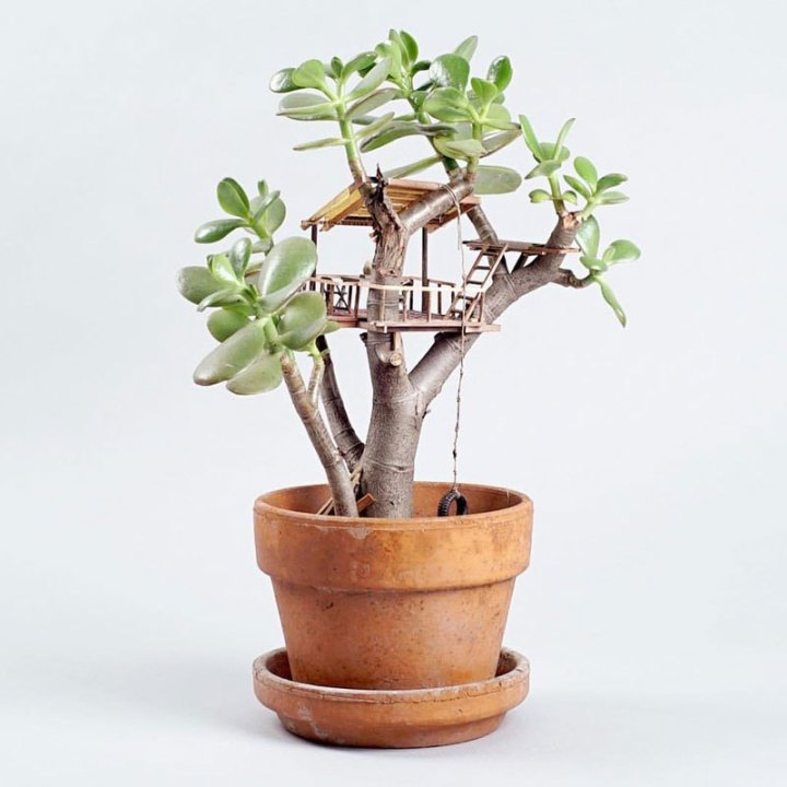 treehouses-for-house-plants-by-jedediah-corwyn-voltz-5