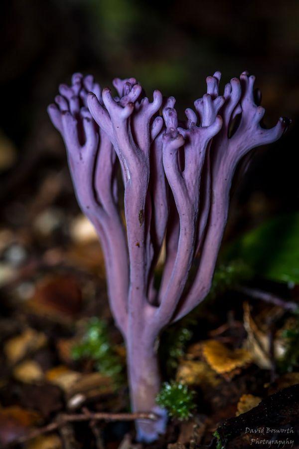 mushroom-photography-151__880