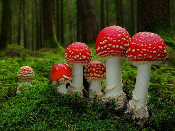 interesting-mushroom-photography-107