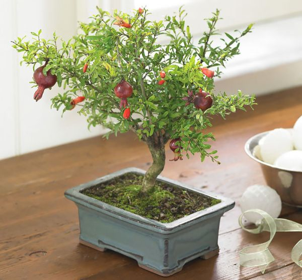 amazing-bonsai-trees-9-5710e7a70a96c__700
