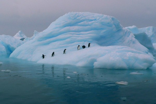iceberg-penguins