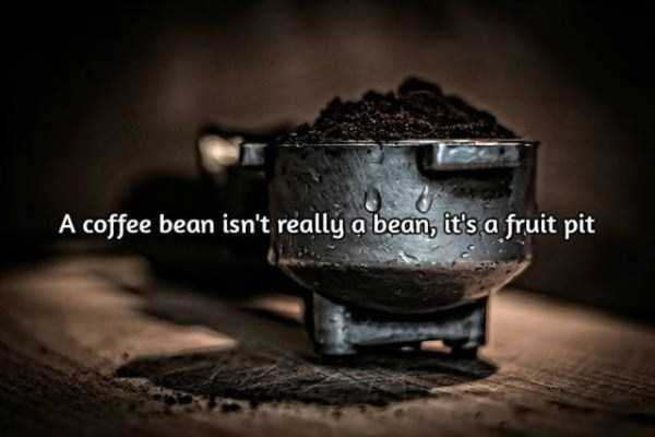 facts-about-coffee-6