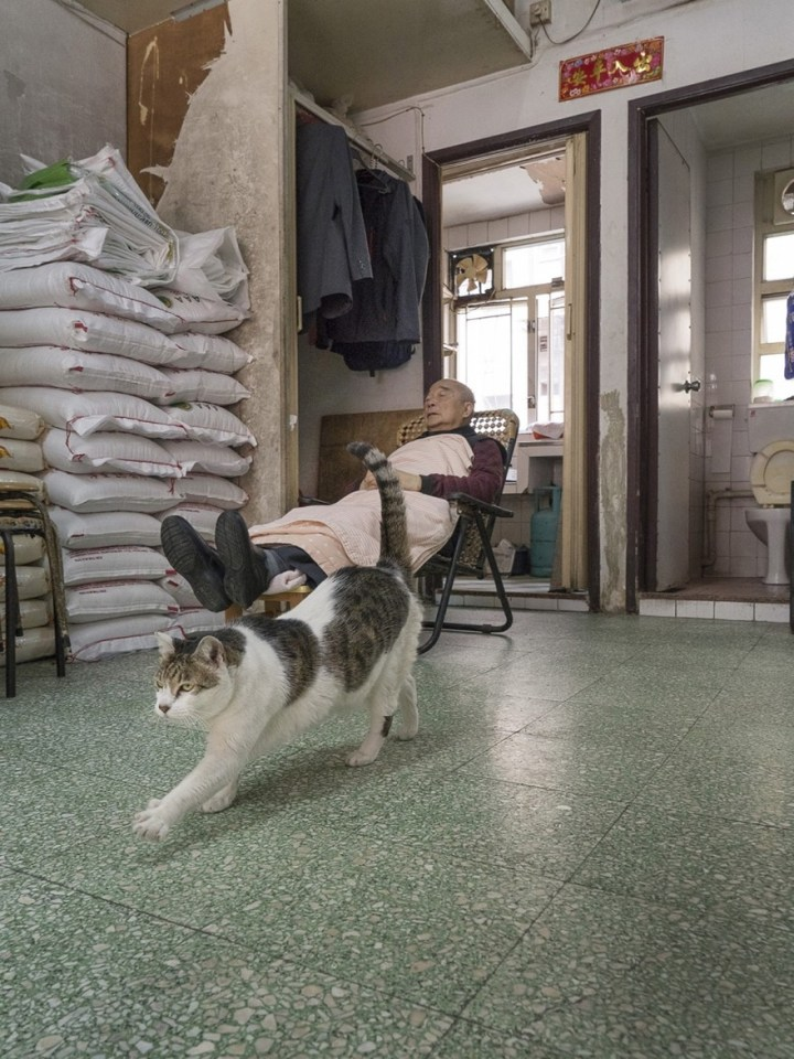 shop-cats-photography-marcel-heijnen-hong-kong-1-5809cd465b981__880