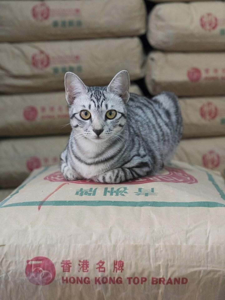 shop-cats-photography-marcel-heijnen-hong-kong-2-5809cd490a548__880