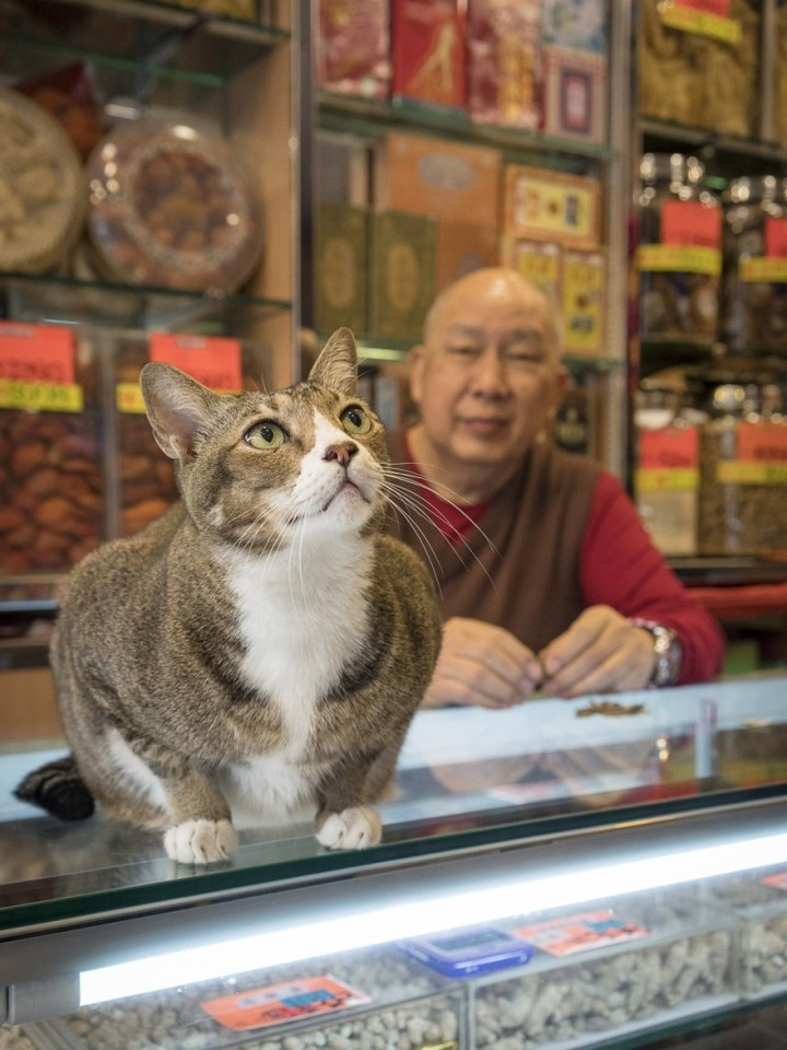 shop-cats-photography-marcel-heijnen-hong-kong-20-5809cd82041a3__880