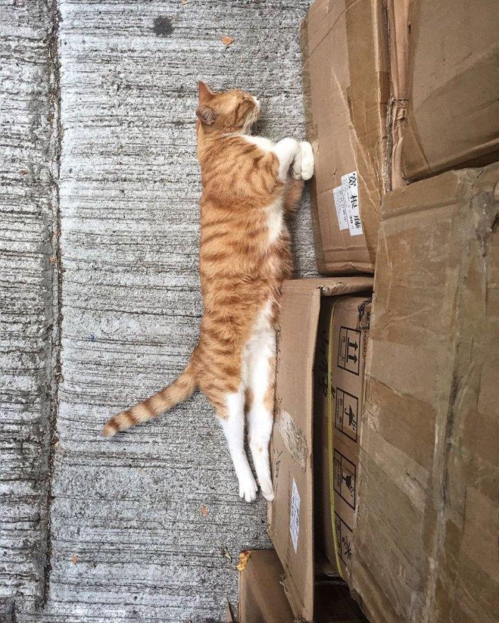 shop-cats-photography-marcel-heijnen-hong-kong-41-5809d32f51e03__880