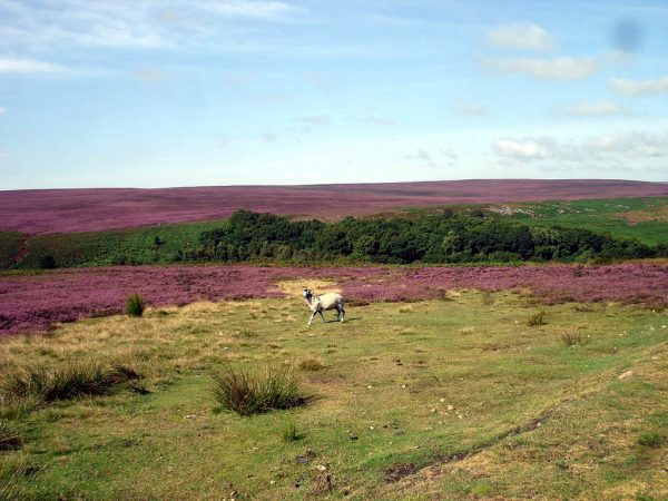 The Moors - North Yorkshire