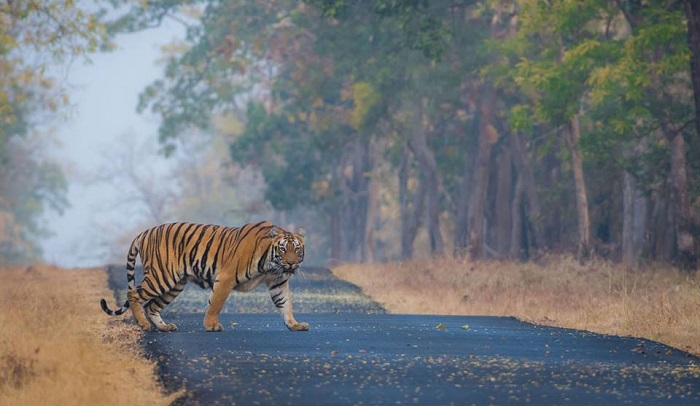 A Day Out with Tigers: Tadoba Andhari Tiger ReserveMemorable India Blog