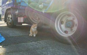 休憩時に作業車の近くにたたずんでいた猫の写真