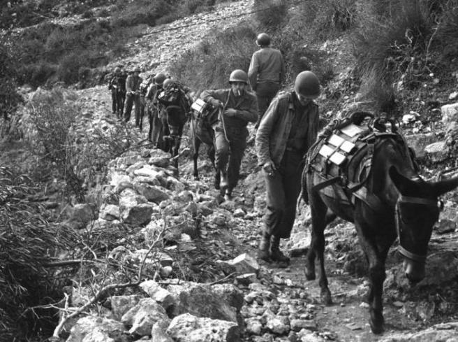 war-mules.jpg