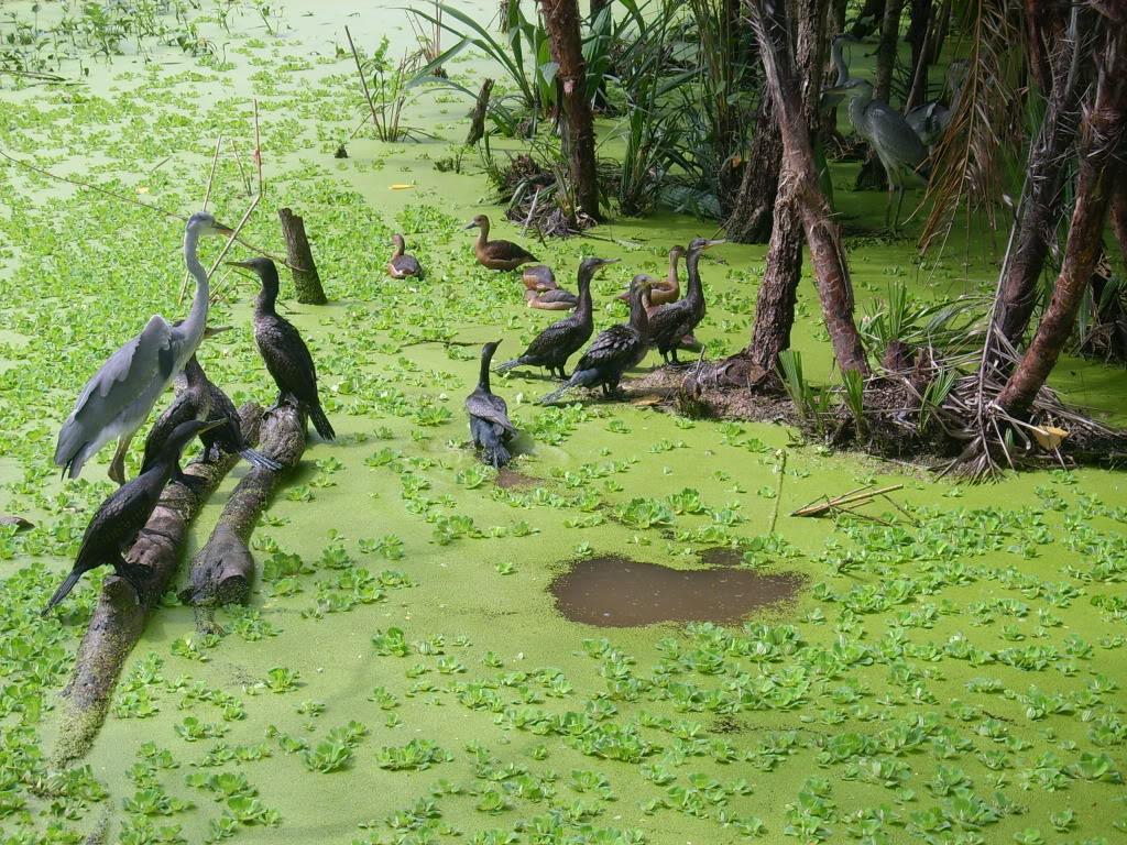 Hình ảnh khu du lịch Sân chim Vàm Hồ (Ảnh: ST)