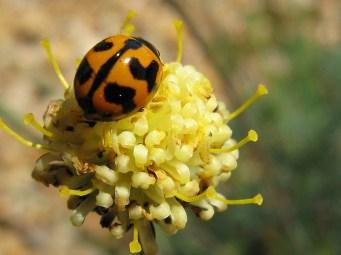 WA wild flower