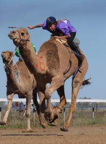 Winton camel races