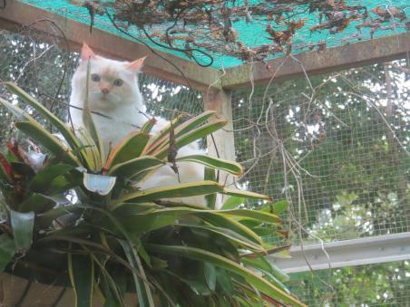 cats 035_4000x3000