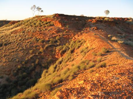 Red dirt, spinifex and a lone tree struggling to survive on the horizon