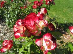 A gardens on bikes 097_3264x2448