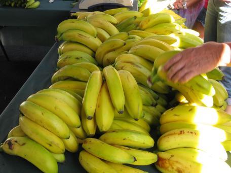 farmers markets 037_2327x1737
