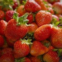 Copeland Strawberry Farms- Rochelle, GA