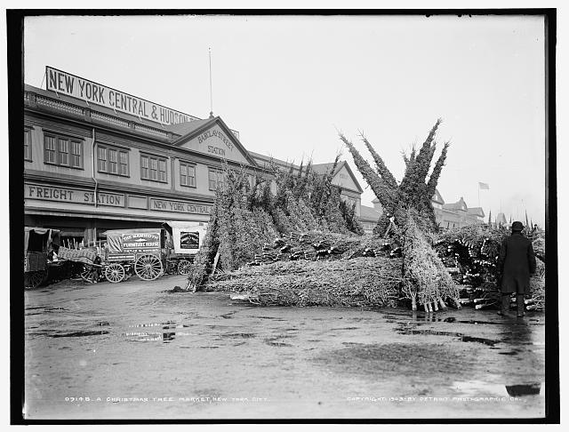 Christmas tree market, New York City.  Circa 1885/1895